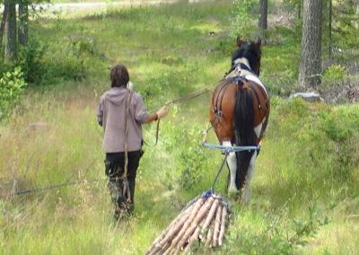 débardage cheval