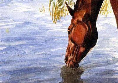 cheval dans la rivière