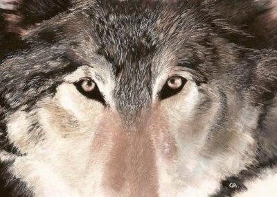 regard loup